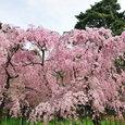 京都御苑横